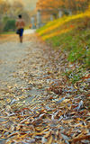 A Walk In The Park. Beautiful autumn afternoon in the park Royalty Free Stock Image
