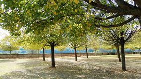 Walk in the park in autumn. A warm autumn day in the west of France. Royalty Free Stock Photography