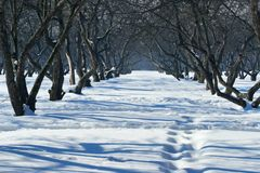 Walk in park at a clear sunny winter day Stock Photo