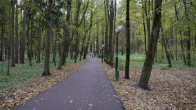 Walk in the park in the fall stock footage