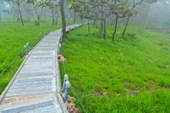 A walk in the park at Pa Hin Ngam national park, Thailand Stock Images