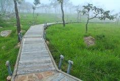 A walk in the park at Pa Hin Ngam national park, Thailand Royalty Free Stock Image