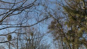 Walk in the park stock footage