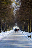 Walk in the park in a winter day Stock Image