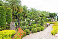 Walk Path And Dwarf Tree In The Garden. Stock Photos