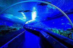 Walk path in aquarium tunnel Royalty Free Stock Image