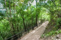 Walk path in forest, travel of Phukradueng, Loei province. Thailand royalty free stock photography