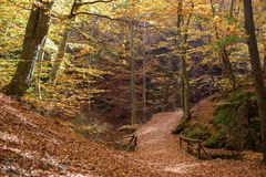 Walk path in a forest. During autumn and bridge covered with leaves Royalty Free Stock Photography