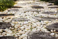 Walk path in garden decorated with stumps and stone Stock Photos