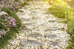 Walk path in garden decorated with stumps and stone Royalty Free Stock Photography