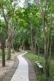 Walk path in garden Royalty Free Stock Photos