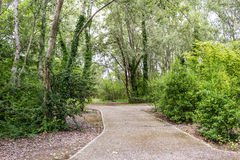 Walk path through green trees Royalty Free Stock Photos