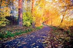 Walk path at sunrise soft light Royalty Free Stock Image