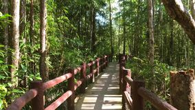Walk on the Path Through Tropical Jungle. HD first person view slow motion. Thailand. stock footage