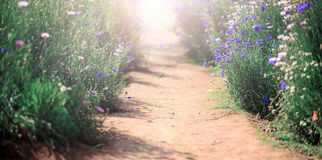 Walk paths with  flower fields Stock Photography