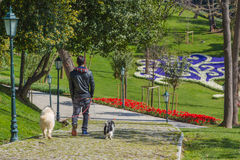 Walk with pets. A man walking with his pets in the garden Royalty Free Stock Photos