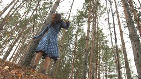A walk in the pine forest. stock video