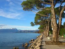 Walk through the pine trees on the lakefront. Between trees and rocks on the beach, lake, snow-capped alpine mountains in the landscape, the air seems fresher in Stock Images