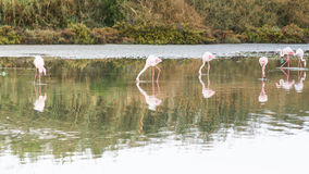 Walk in the pond Royalty Free Stock Photos