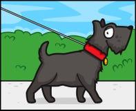 walk psów Zdjęcia Royalty Free