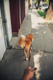 Walk with a red dog on city street Stock Photo