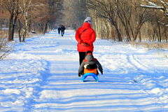 Walk on sledging in winter park . Stock Photo