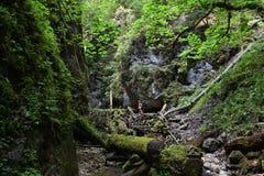 Slovak Paradise. Walk in the Slovak Paradise National Park stock photo