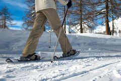 Walk with snowshoes. On the beaten track royalty free stock photo