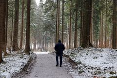 A walk in the snowy winter forest Royalty Free Stock Images