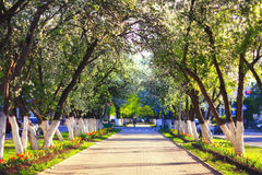 Walk in the Spring Park cherry Royalty Free Stock Photo