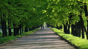 Walk through the spring park stock footage