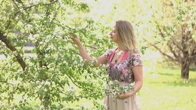 Walk in spring park. Young woman in folk dress stands near a flowering tree and inhales its aroma stock video