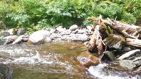 Walk in the stream stock video footage