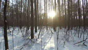 Walk through the thickets of the forest. stock footage