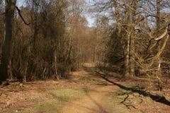 A Walk Throug The Trees Stock Photography