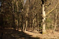 A Walk Throug The Trees Stock Photo