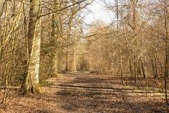 A Walk Throug The Trees Royalty Free Stock Photos