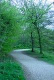A Walk Throug The Trees Stock Image