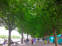 Walk in to green trees. A picture of people walking in big green trees,in thames river,in London,in a summer day Stock Image
