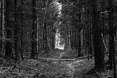 Walk toward the lights. A path through the woods leading to an enlightened opening Stock Images