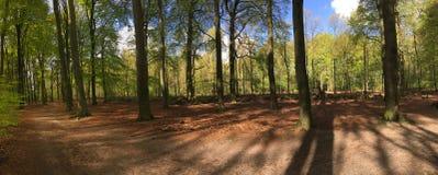 Walk trail panorama at the hoge veluwe Stock Images