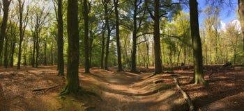Walk trail panorama at the hoge veluwe Royalty Free Stock Photos