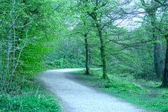 A Walk Through The Trees Royalty Free Stock Photos
