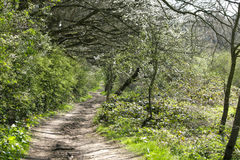 A Walk Through The Trees Royalty Free Stock Image