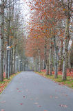 Walk among the trees and leaves in autumn Stock Image