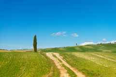 A walk in the Tuscany nature. A quick walk in the beautiful Val d'Orcia in a sunny day Stock Photography