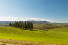 A walk in the Tuscany nature. A view of the famous cypresses in Val d'Orcia, with Montalcino in the background Royalty Free Stock Photos