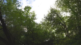 Walk under the trees in the Moscow Park stock footage