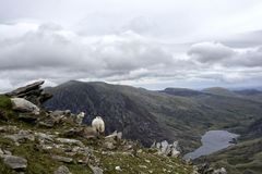 Walk up Y Garn Snowdonia North Wales UK. Royalty Free Stock Photos