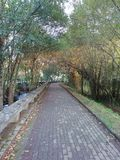 Walk of the river. With fallen leaves in autumn stock photo